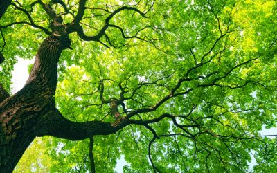 Mature Trees and The Value of Your Property